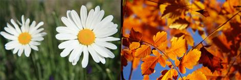 Primavera, autunno