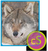 Il lupo: carta di identità
