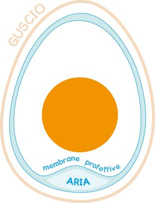 Dentro l'uovo