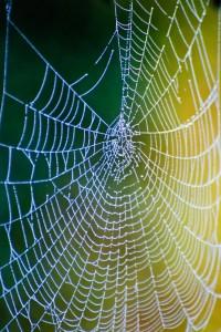 web-9